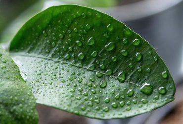 Environmentally Efficient Homes